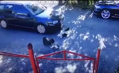 """Pui de câine călcați de un șofer. """"Niciodată nu mi-a fost dat să văd o asemenea cruzime"""". VIDEO îngrozitor"""