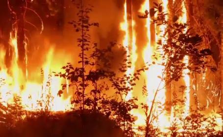 Incendiu de pădure
