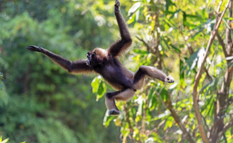 """""""Invazia maimuțelor"""". O femeie și 4 copii, uciși, după ce mai multe primate au dărâmat un zid peste ei"""