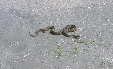 VIDEO. Un șarpe a fost zărit pe plaja din Mamaia. Reacția turiștilor
