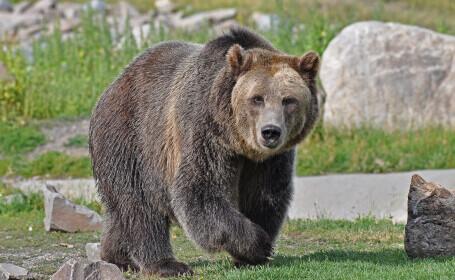 """Agent Green: Noua OUG va duce la executarea imediată a sute de """"urşi nevinovaţi"""""""
