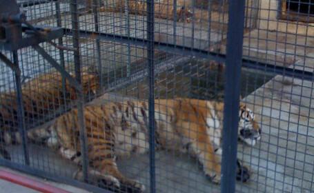 Animalele de la Zoo Onesti traiesc in propriile fecale si beau apa cu urina
