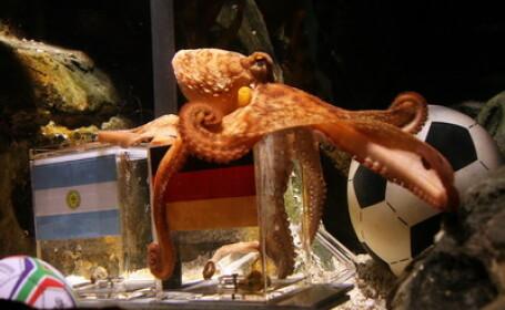 Paul, caracatita prezicatoare