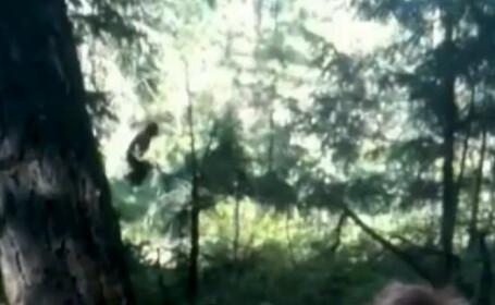 Bigfoot, filmat in padure. Turistii care l-au surprins habar nu aveau ca a trecut pe langa ei. VIDEO