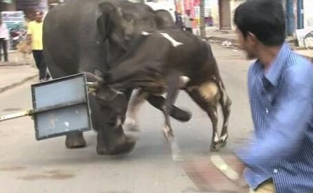 Moartea a venit din padure. Oras indian distrus de doua creaturi gigant. VIDEO SOCANT
