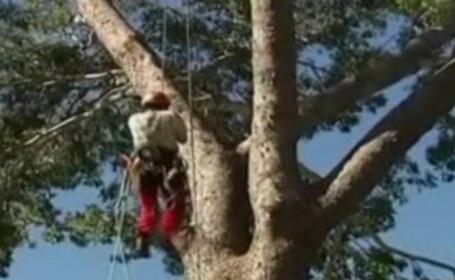 VIDEO. Sport extrem in Australia: Campionatul de catarat in copaci