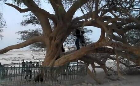 Pomul vietii