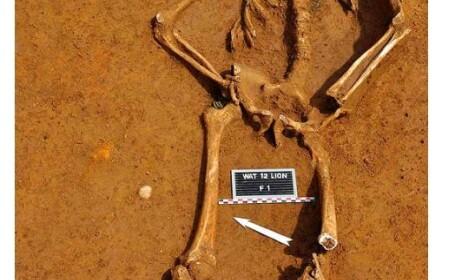 Imagini rare. Trupul unui soldat cazut acum 200 de ani la Waterloo, dezgropat