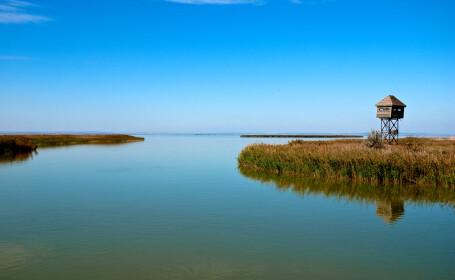 O minune a naturii ar putea ajunge un loc pustiu. De ce risca Delta Dunarii sa ramana fara peste
