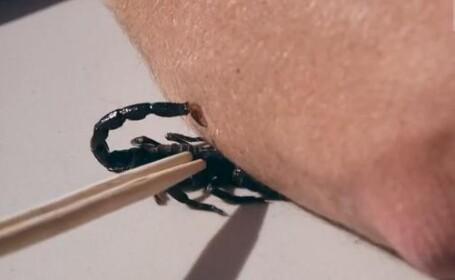 scorpion, intepatura