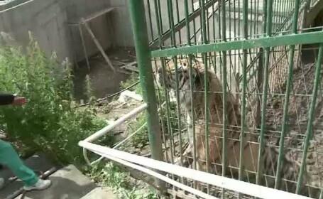 Barbatul atacat de animalul salbatic la Zoo Brasov si-a pierdut bratul. Ce spune conducerea parcului