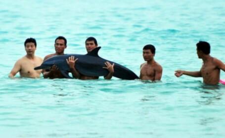 Delfin chinuit