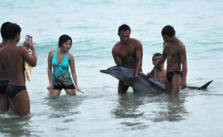 delfin, China