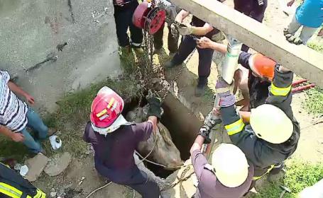 Operatiune dificila de salvare, dupa ce un cal a cazut intr-un canal de 3 metri adancime