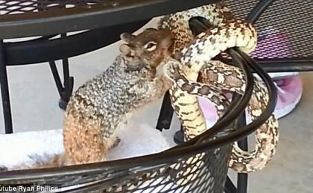 O veverita curajoasa pune la respect un sarpe care, in mod normal, ar fi omorat-o. VIDEO