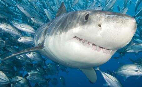 Femeie atacata de un rechin urias la snorkelling, in Atlanticul de Sud. Gestul sotului ei i-a salvat viata