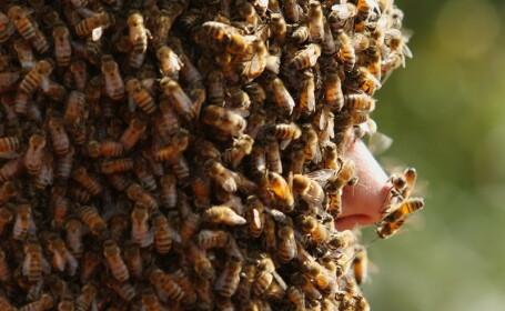 Concursul interzis celor slabi de inima. Ce s-a intamplat cu acest barbat dupa ce s-a lasat acoperit de sute de mii de albine
