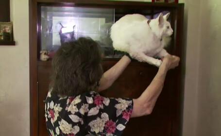 pisica impaiata in vitrina
