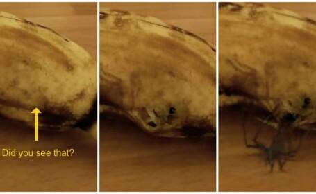 Clipul care a ingrozit internetul: momentul terifiant in care un paianjen sare dintr-o banana