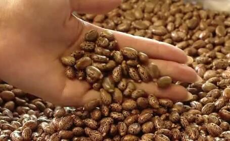 Planta minune care ii aduce unui clujean 20.000 de euro la fiecare hectar. Culturile de pe vremea comunismului, redescoperite