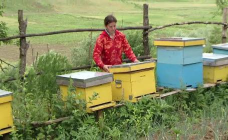 apicultori Vaslui