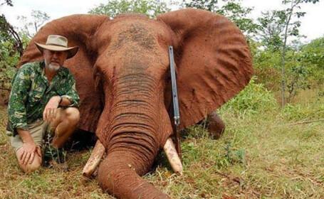 parlamentar australian cu elefantul vanat