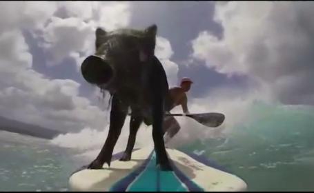 purcelus surfer