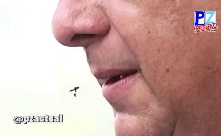 viespe