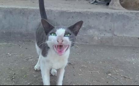 Un oraș vrea să interzică pisicile, în urma protestelor ecologiștilor