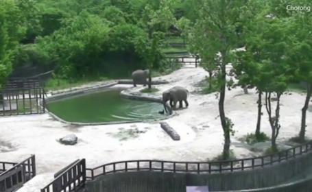 Pui de elefant, salvat