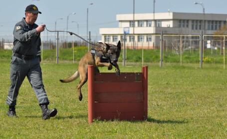 Unul dintre cei mai performanti caini ai Vamii a ajuns la varsta de pensionare