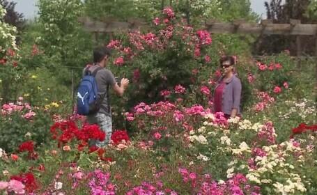 trandafiri arad