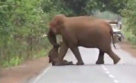 Imagini sfâșietoare. Cortegiu funerar al elefanților pentru puiul mort. VIDEO