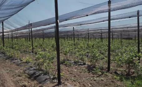 Soluția găsită de fermierii români pentru a-și salva culturile de grindină cu fonduri UE