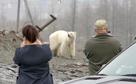 urs filmat in oras