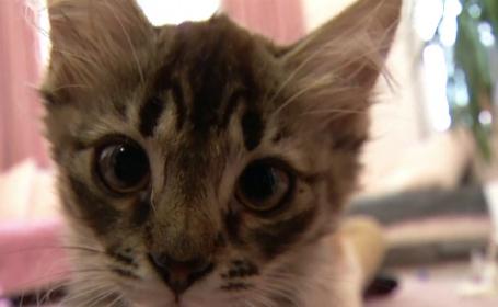 Cum arată cel mai popular centru de terapie cu pisici din Ucraina