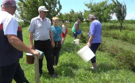 Un fermier din Suceava le-a donat sătenilor toată recolta din acest an. Cât investise în ea