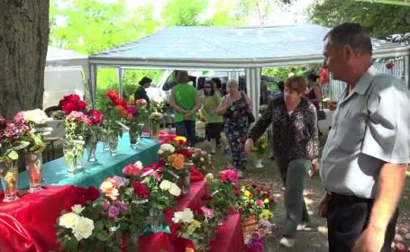Localitatea din România care s-a specializat în creşterea trandafirilor. Cât se câştigă