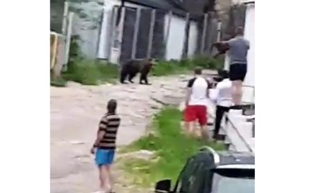 VIDEO Turiști inconștienți. Filmau și vorbeau cu ursul de la doar câțiva metri distanță