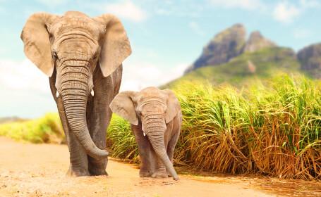 Un indian le-a lăsat pământul moștenire elefanților săi. Cum a reacționat soția