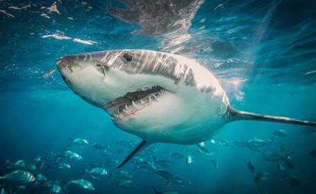 Ce s-a întâmplat când patru rechini s-au apropiat de o plajă plină de oameni, în Miami