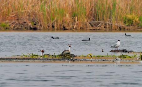 Speciile de păsări care se mai găsesc doar în Delta Dunării. Care este motivul