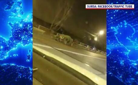 Un cal înspăimântat a produs un accident în Ploiești, după ce a luat-o la goană pe contrasens