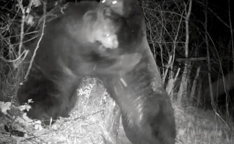 Confruntarea titanilor. Un urs chinez și unul rus s-au bătut chiar pe granița dintre cele două state
