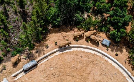 Dezastrul provocat de o turmă de elefanți care a mers 500 de km prin mai multe orașe din China. Zoologii nu înțeleg motivul