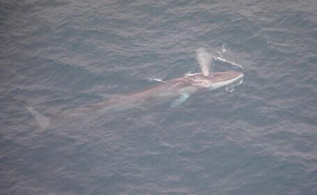 Un adolescent este în comă după un accident ciudat: O balenă a sărit pe barca sa