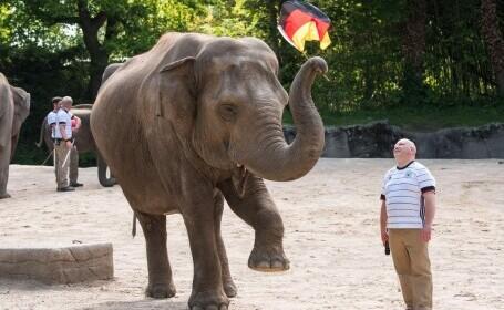 """Un elefant """"spiritist"""" din Hamburg a prezis că Franţa va câştiga meciul cu Germania la EURO 2020"""
