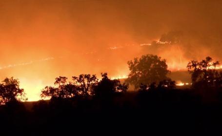 Incendiile de vegetație se extind în SUA. Trei state sunt afectate