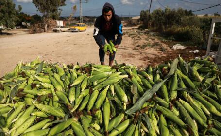 Israelul anunță reluarea limitată a exporturilor agricole din Fâşia Gaza