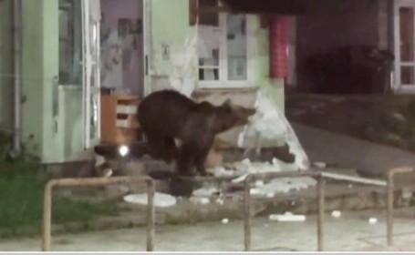 ursoaică cofetărie